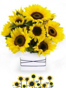 Sunflower Box arrangement